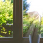 Window In Summer